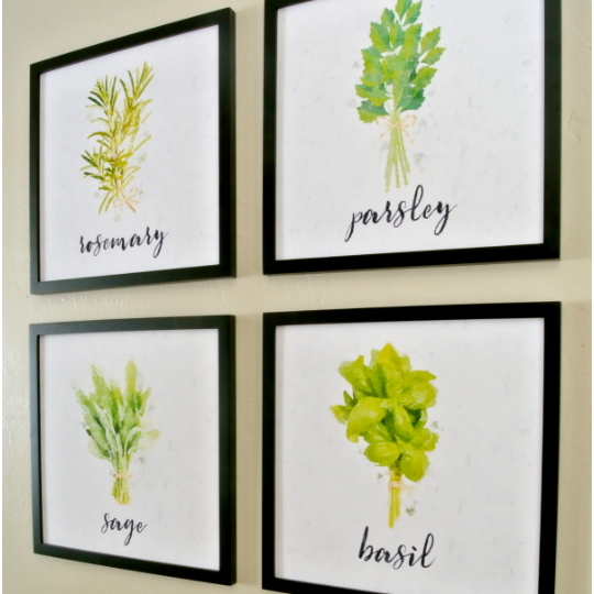 Wall Collage Of Herbs On White Back Ground And In Black Frames